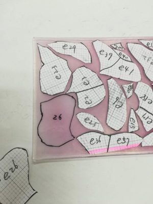 コスモスの花弁はピンク