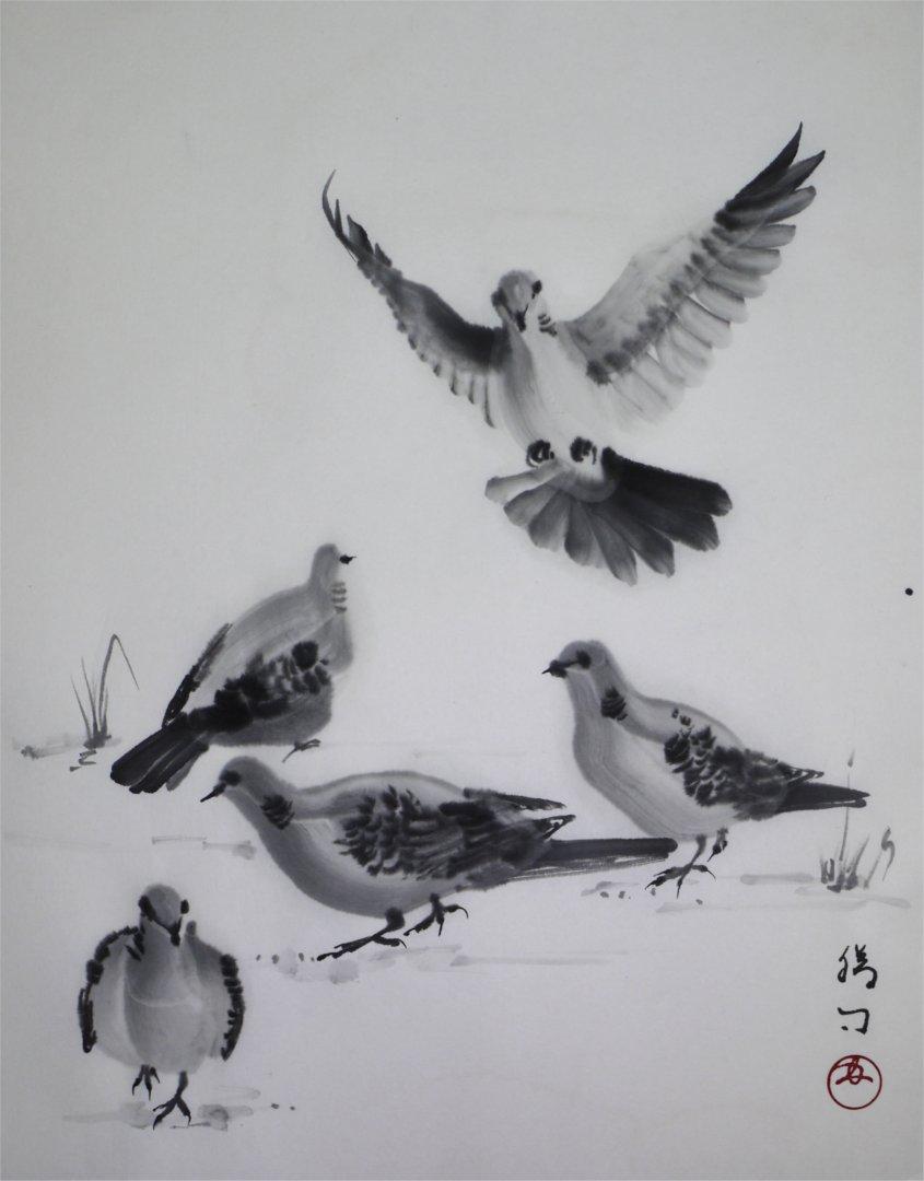 彩墨画(水墨画)「鳩 - キジバト -」福田勝司筆」